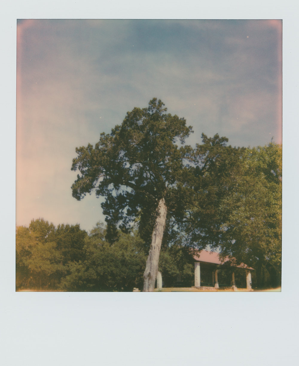 pola week tree (1 of 1).jpg