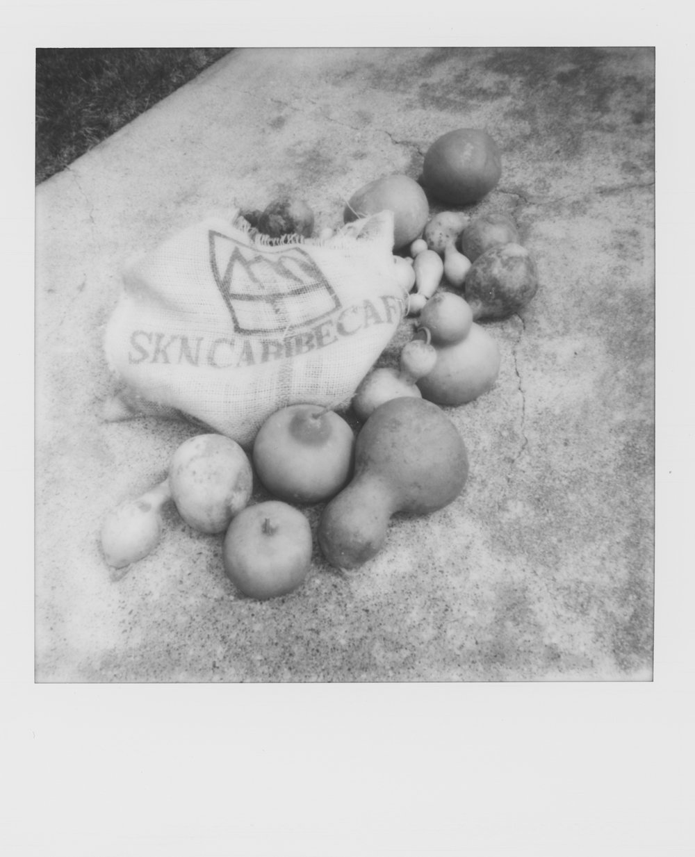polaroid week gourds (1 of 1).jpg