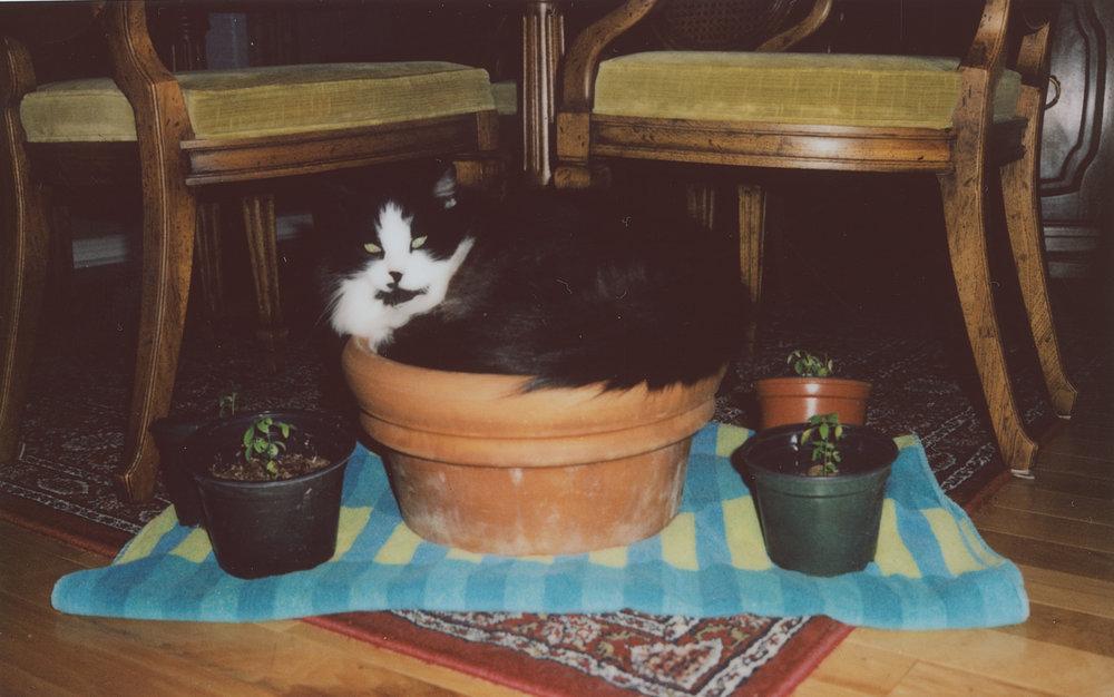 plant pot tatman (1 of 1).jpg