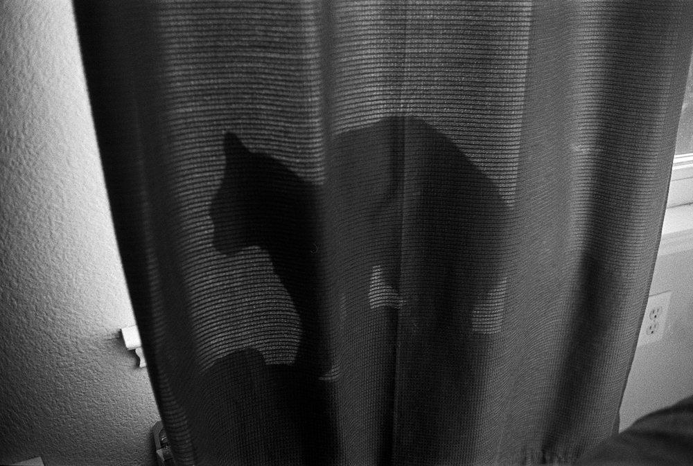 diddles behind curtain (1 of 1).jpg