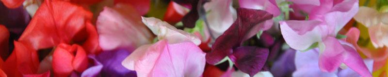 U Pick Flowers
