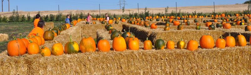 header-event-pumpkinfestival.jpg