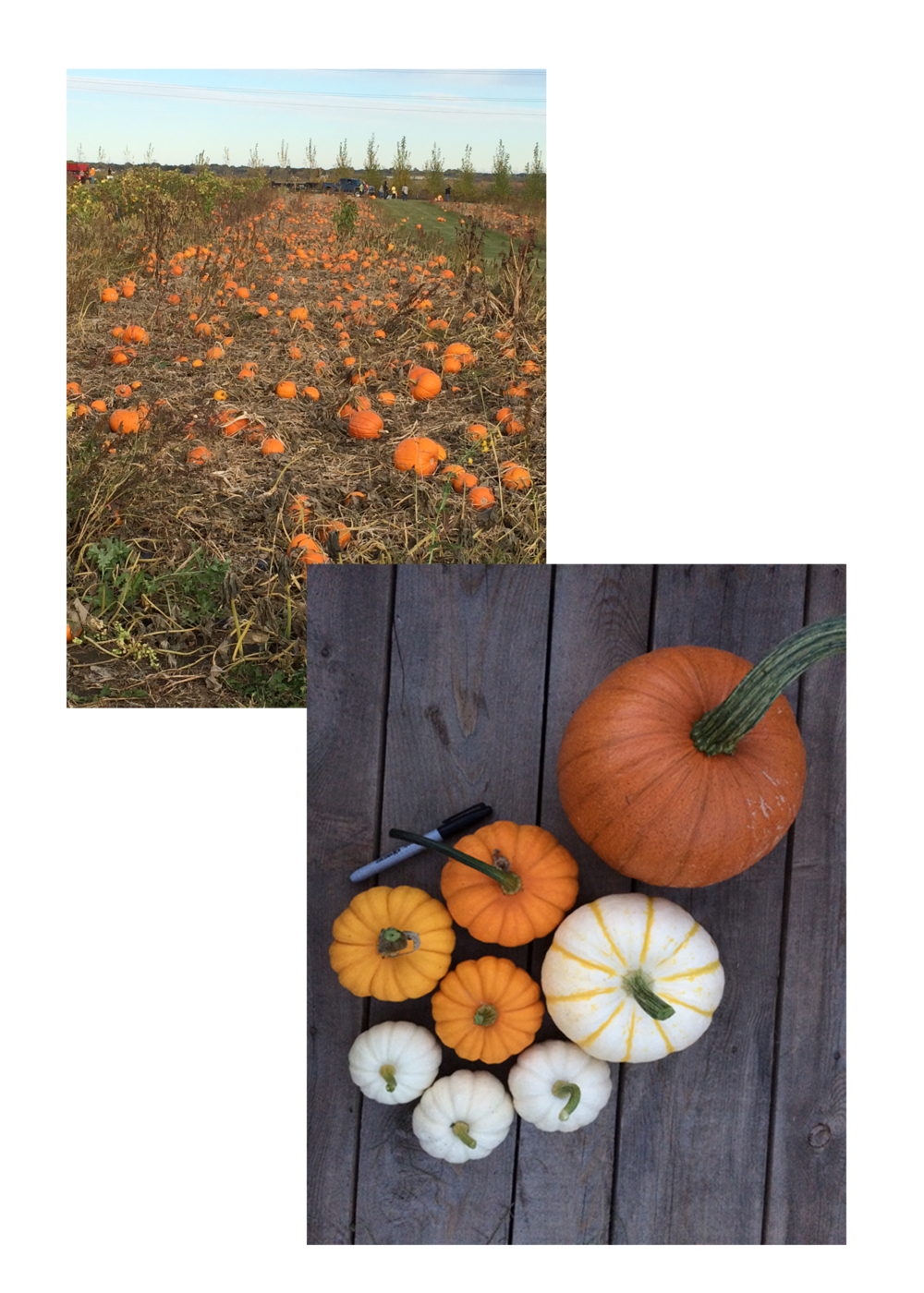 Pumpkinfestcollage.png