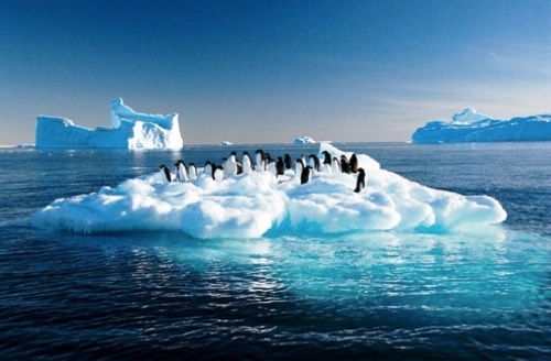 penguins-antarctic.jpg