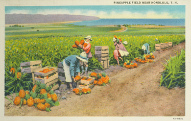 "Post card: ca 1935-- UH library ""aloha hawaii scrapbook"""