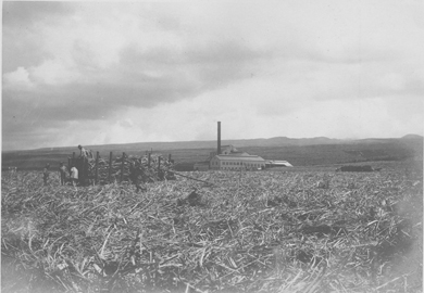 "central oahu ca 1935-uh library ""aloha hawaii scrapbook"""
