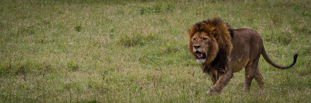 vacaciones safari leon