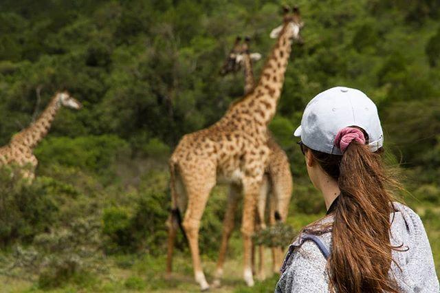 No existe mejor manera de entrar en contacto con la naturaleza que recorriéndola a pie.  Gracias a nuestra alianza con @wayo_africa , somos de las pocas compañías que pueden ofrecer safaris caminando  en Tanzania, lo que garantiza la máxima aventura sin incurrir en riesgos.  Para muchos, esta aventurera experiencia representa lo más memorable de su safari. Ven y experiméntalo por ti mismo. 🐾🦁 . . #africa #wildlife #girafa #trek #safari #tanzania #animals #adventure #nature #rutaafrica #lion
