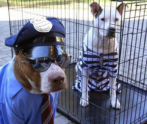 pit-bull-funny-cop-and-robber.jpg