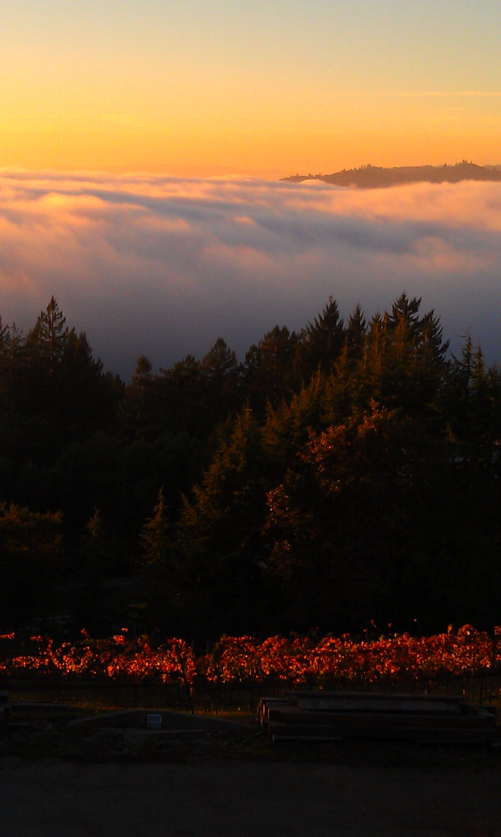 SunsetFog1.jpg