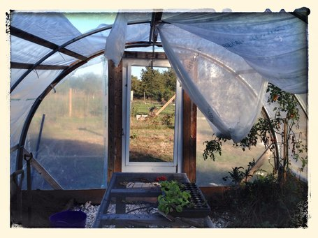 Translucent plastic sheets (rather than polycarbonate panels) wrap this hoop house