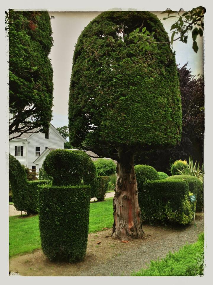 Mushroom tree