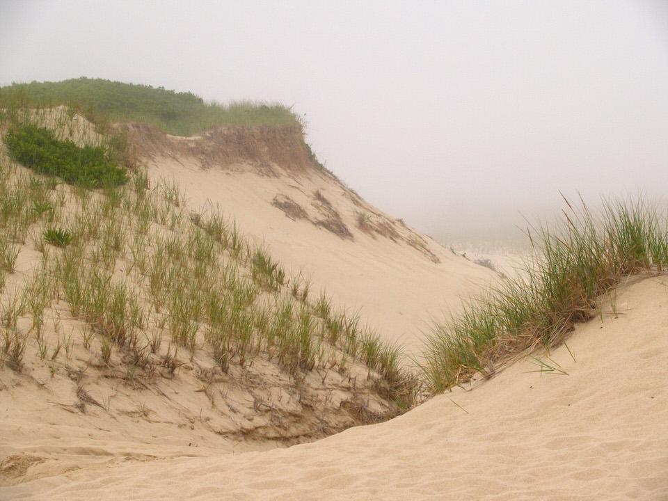 Dune fog
