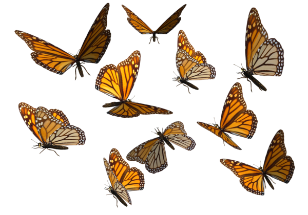 monarch_page.png