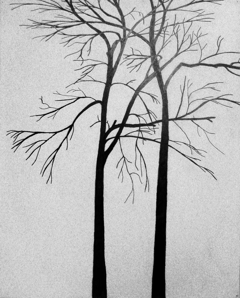 graphite line trees.jpg