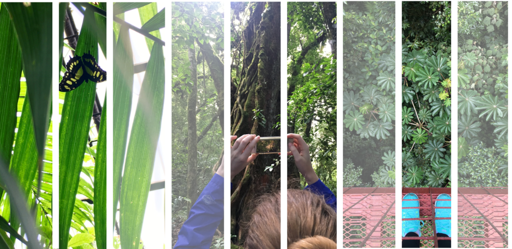 Photos from Costa Rica. By Sara Benitez, M2.