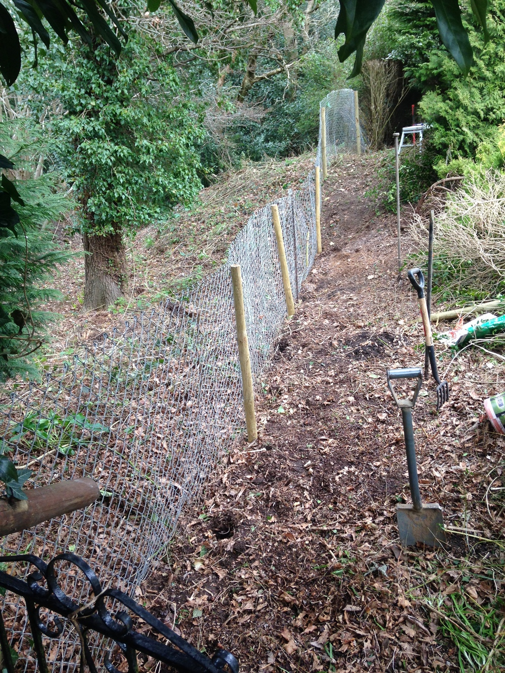 After removing the privet hedge and re-fencing