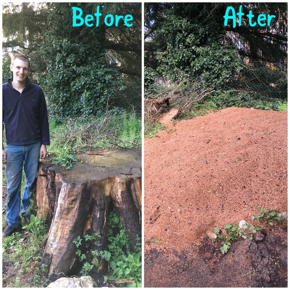 No stump is too big!