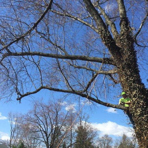 treecutter2.jpg
