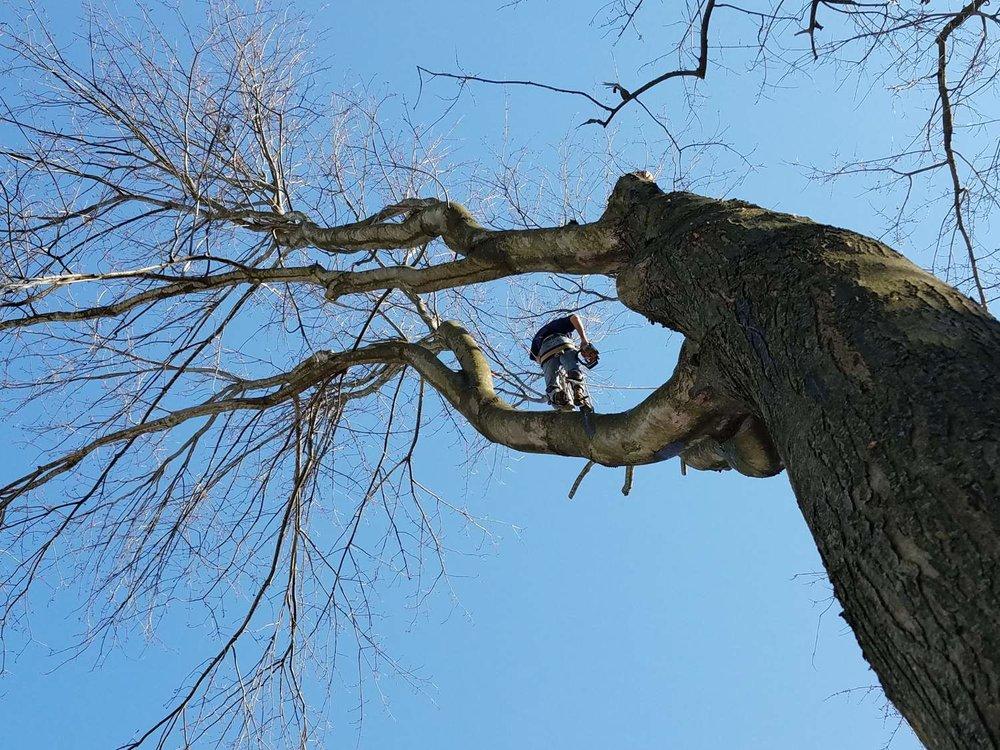 steve_tree1.jpg