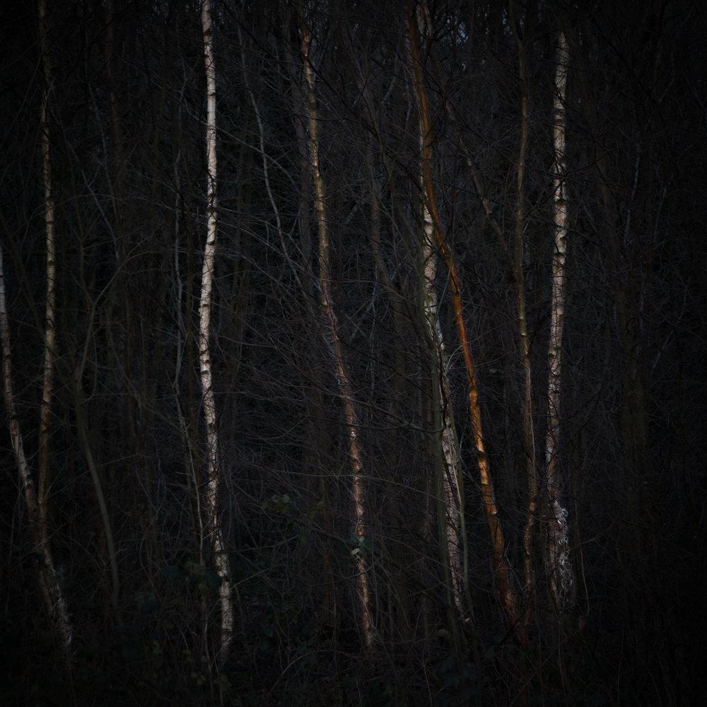 20170302-Friday_Woods-88.jpg