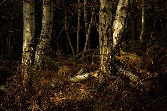 Closer crop of the woodland scene from a dog walk last week. Liking the colour, but wishing for snow!!! #landscapephotography #landscapelover #landscape_captures #landscapes #hpow #appicoftheweek #picoftheday #picoftheweek #photooftheday #landscape_photography #landscape_lovers #landscapecaptures #landscapephotomag #getoutside #scape_captures #LPM #fotocatchers #agameoftones #osmaps #canonuk #visitengland #visitessex  #ordanancesurvey  #bestukpics #ukgreatshots #bestukpics #ukshooters #topukphoto #ukpotd #scenicbritain