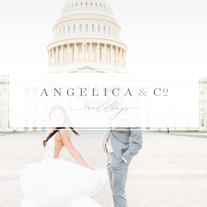 Angelica & Co.    - brand & web -
