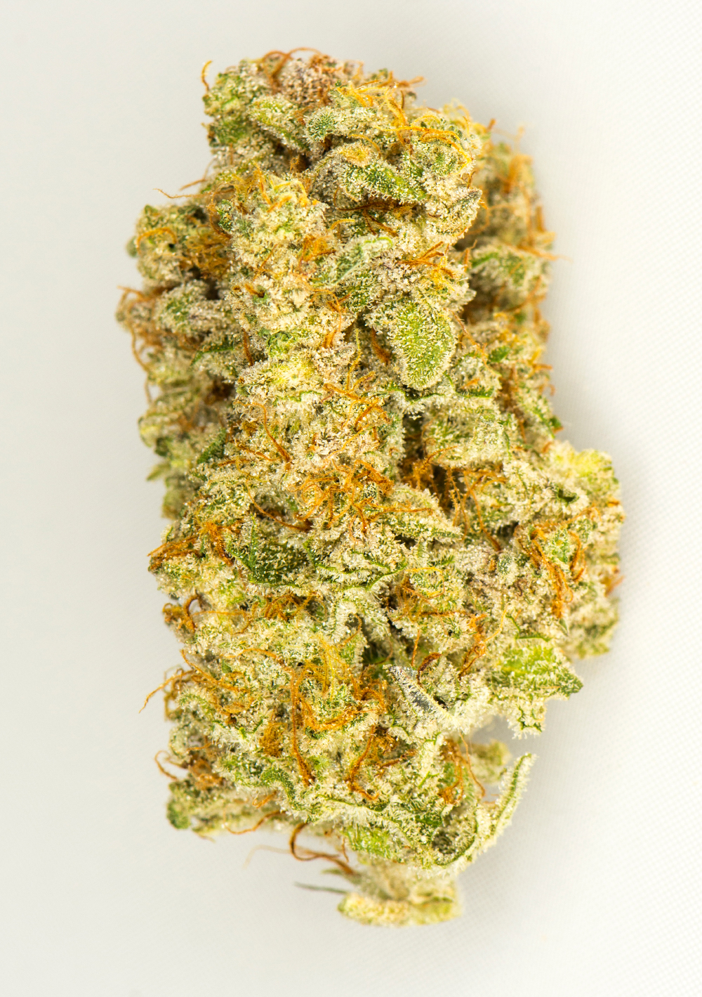 <a>BLUE GALAXY</a><strong>INDICA</strong>