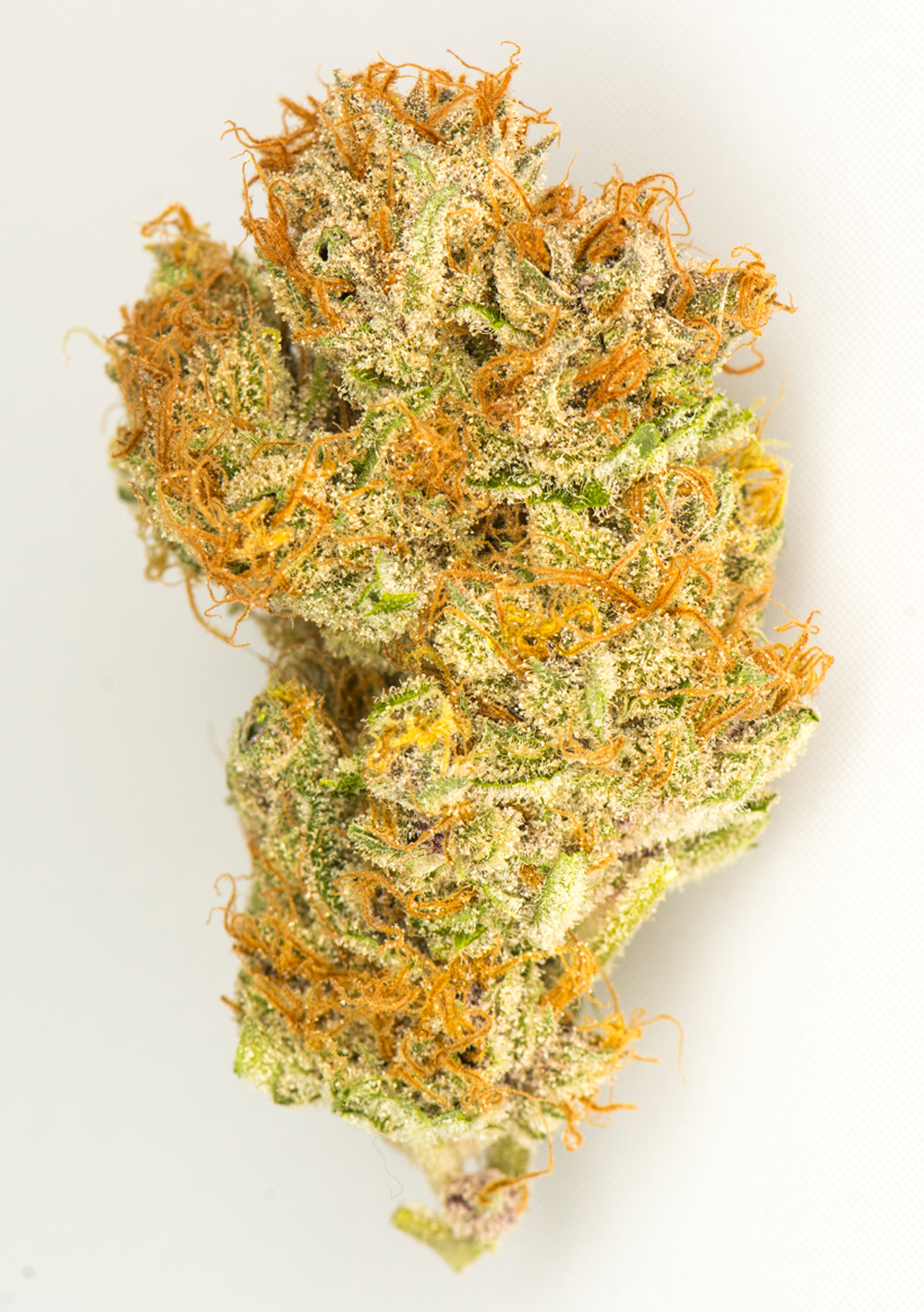 <a>BLACK CHERRY SODA</a><strong>SATIVA DOMINANT HYBRID</strong>