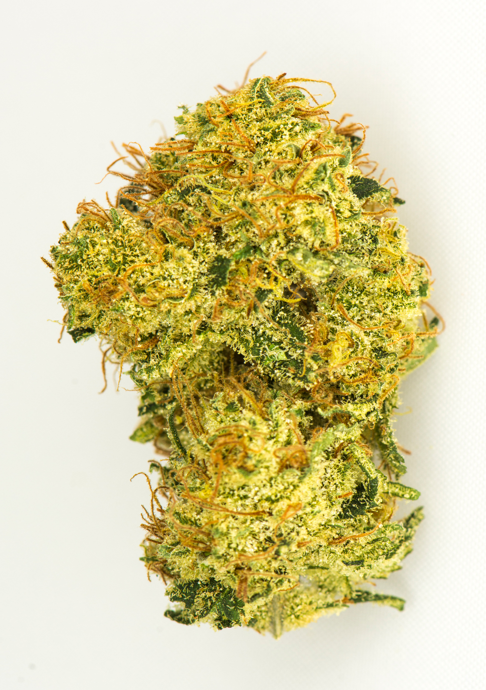 <a>DUTCH TREAT</a><strong>INDICA DOMINANT HYBRID</strong>