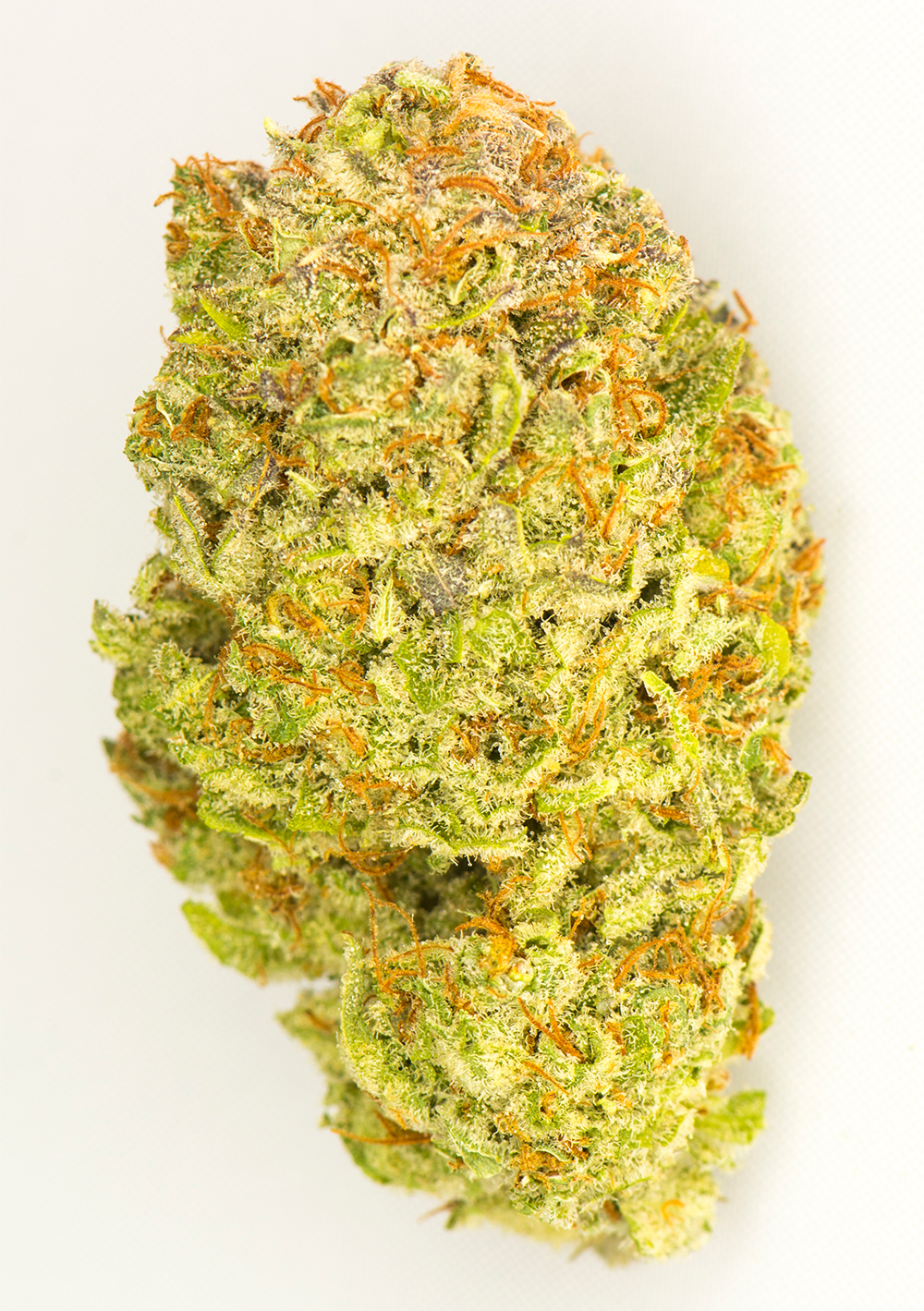 <a>SOUR KUSH</a><strong>SATIVADOMINANT HYBRID</strong>