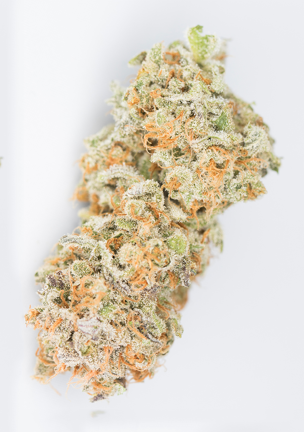 <a>CHOCOLOPE</a><strong>SATIVA DOMINANT HYBRID</strong>