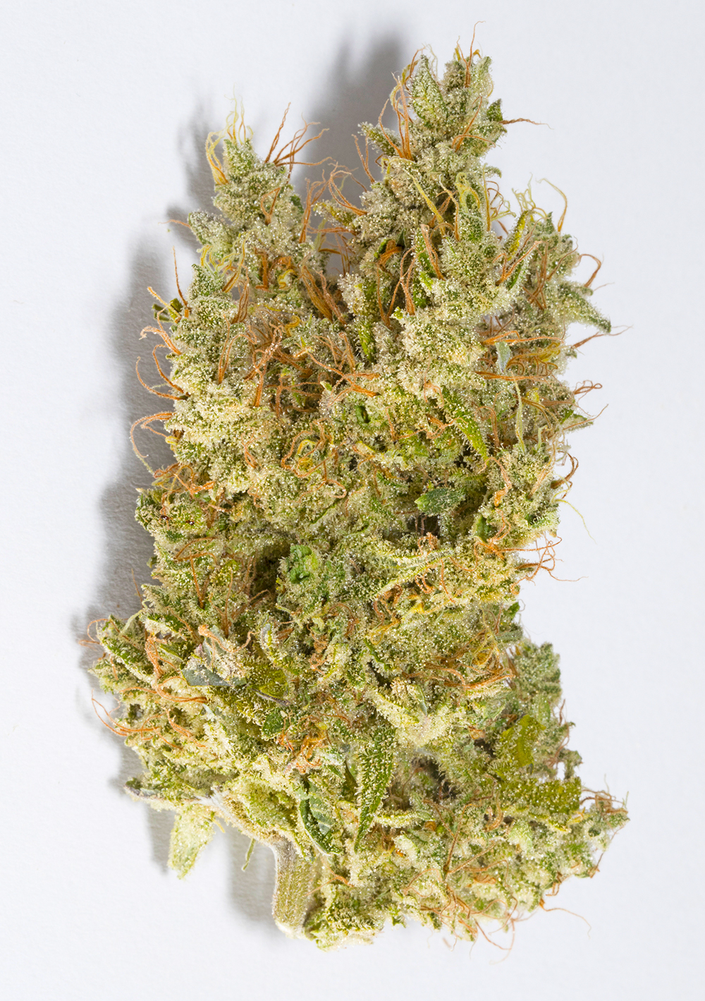 <a>MOONWALKER</a><strong>INDICA DOMINANT HYBRID</strong>