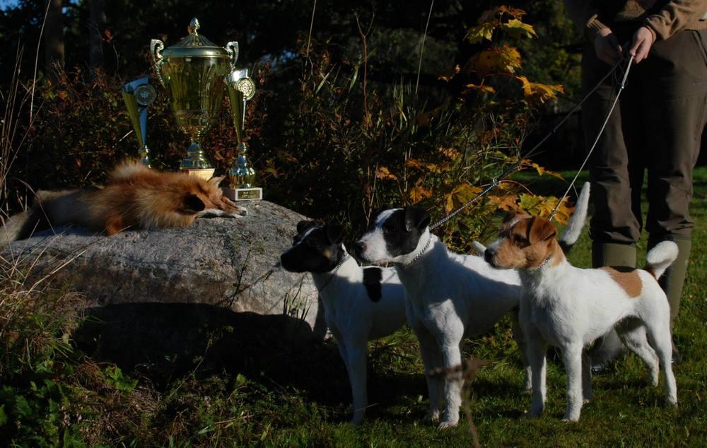 Lokakuun alussa oli Parsoneiden erikoisnäyttely, jossa meidän koirat pärjäsivät todella hyvin. Hienointa oli Muskan voitto käyttöluokan nartuissa ja Scott voitti käyttöluokan urokset ja oli ROP käyttökoira! Ebba voitti kovatasosen valioluokan ja oli koko näyttelyn toiseksi paras narttu! :)  Metsästyskausi jatkuu ja ensi vuoden alussa meillä syntyy toivottavasti pentuja Muskalle. Isänä pennuille on Toby.