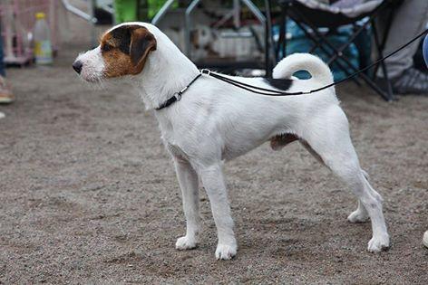 """Tammenkolon Hubert """"Puppe"""""""