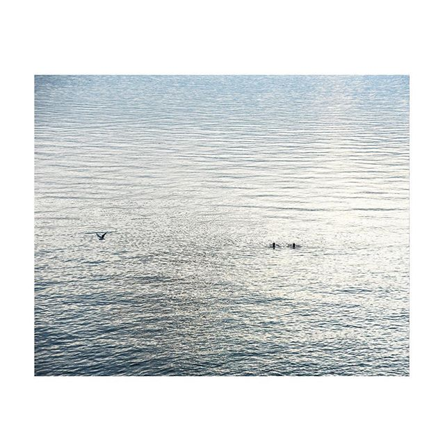 Last swims... #indiansummer #littlebitsof_life #lacleman #iamatraveler #wandelust #autumn #light #seekmoments #letsgosomewhere #wanderfolk #openmyworld #mytinyatlas #visualoflife #seekinspirecreate #exploretocreate
