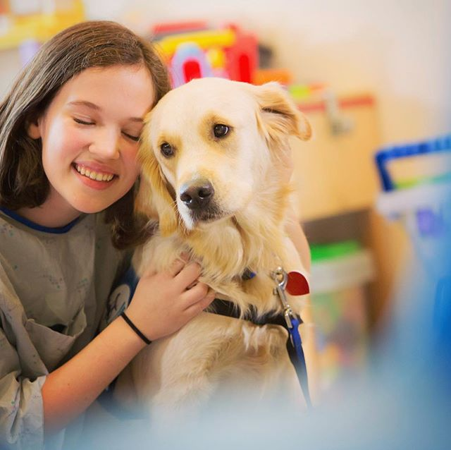 Studio McDermott serves #Healthcare and #Education clients. #servicedog
