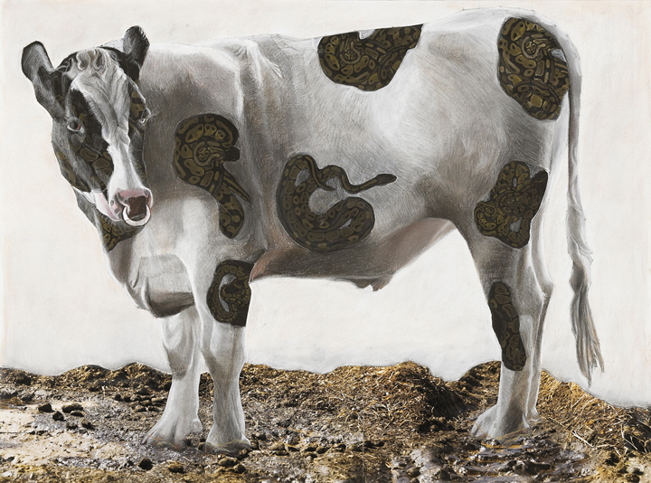 Cow with Snake Tattoos