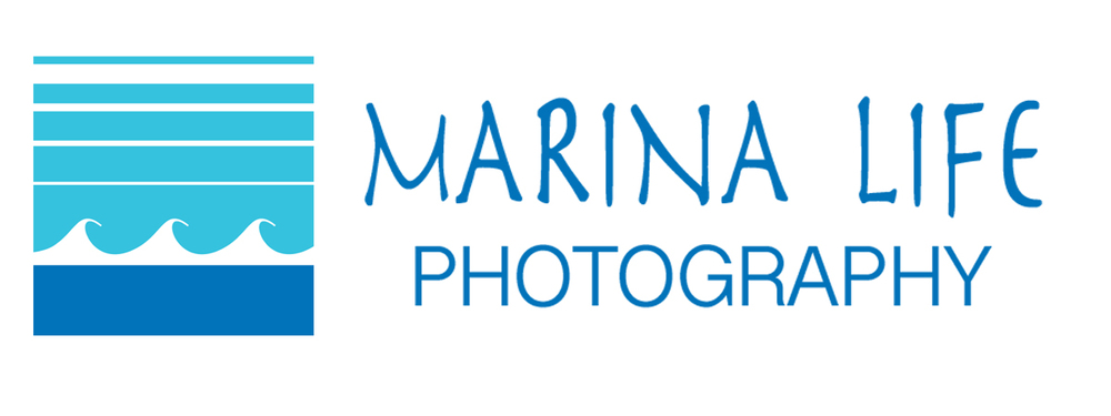 Marina Life Photography