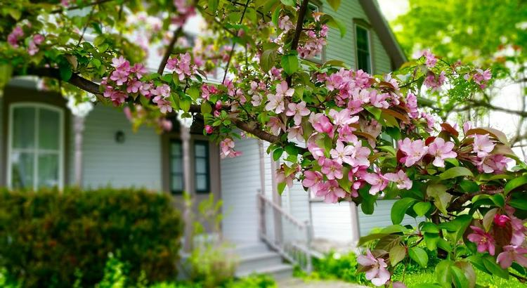 house spring blossoms.jpeg