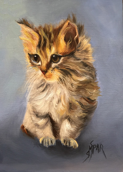 Maine Coon Kitten - Misty