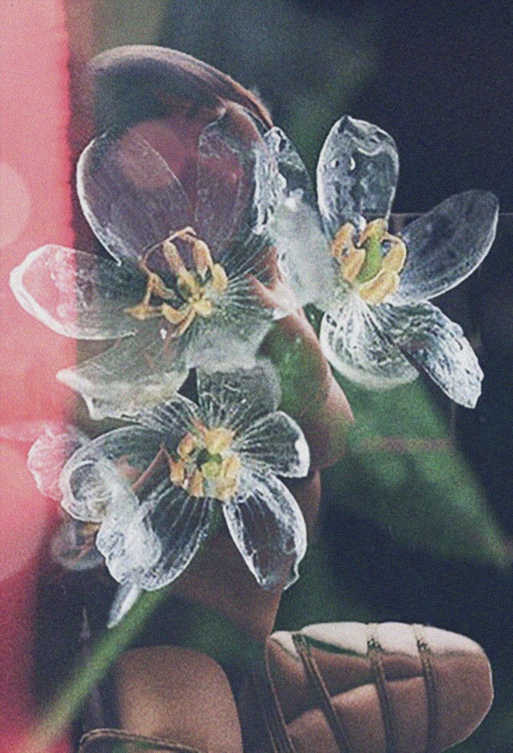autumnelizabethclarktransparentflowers.jpg