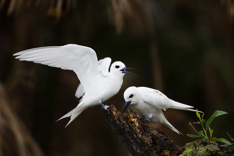 White Terns, full of character.