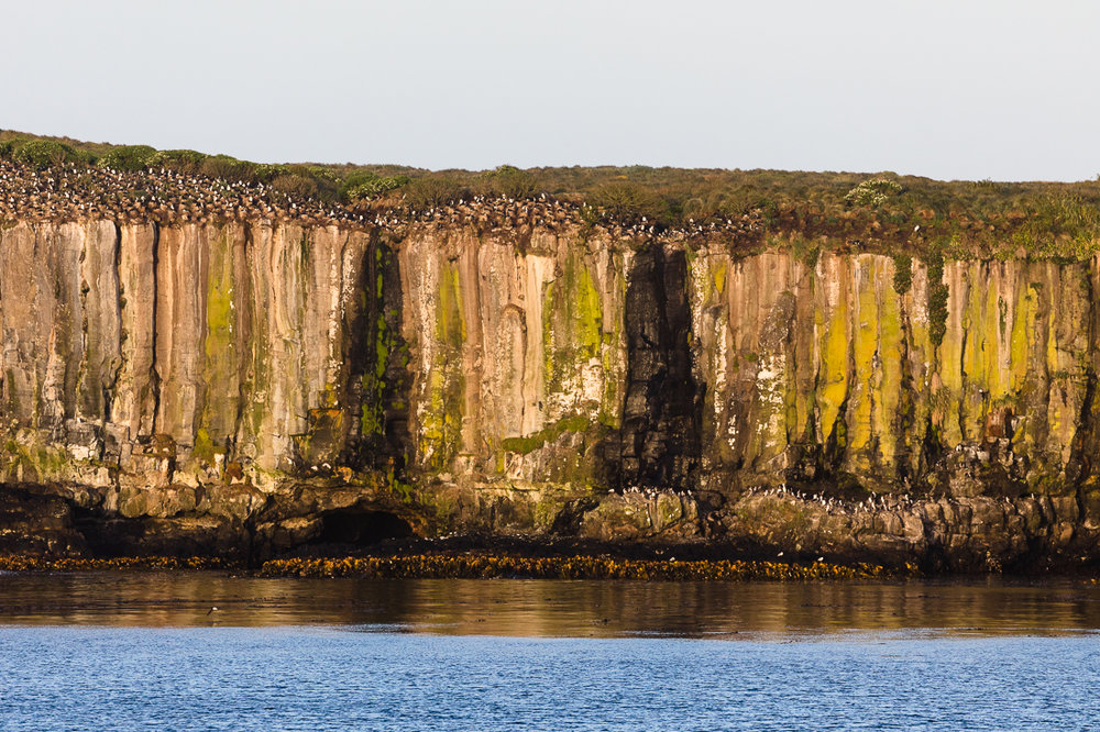 Calm waters beneath the Auckland Island Shag colony on Enderby Island.