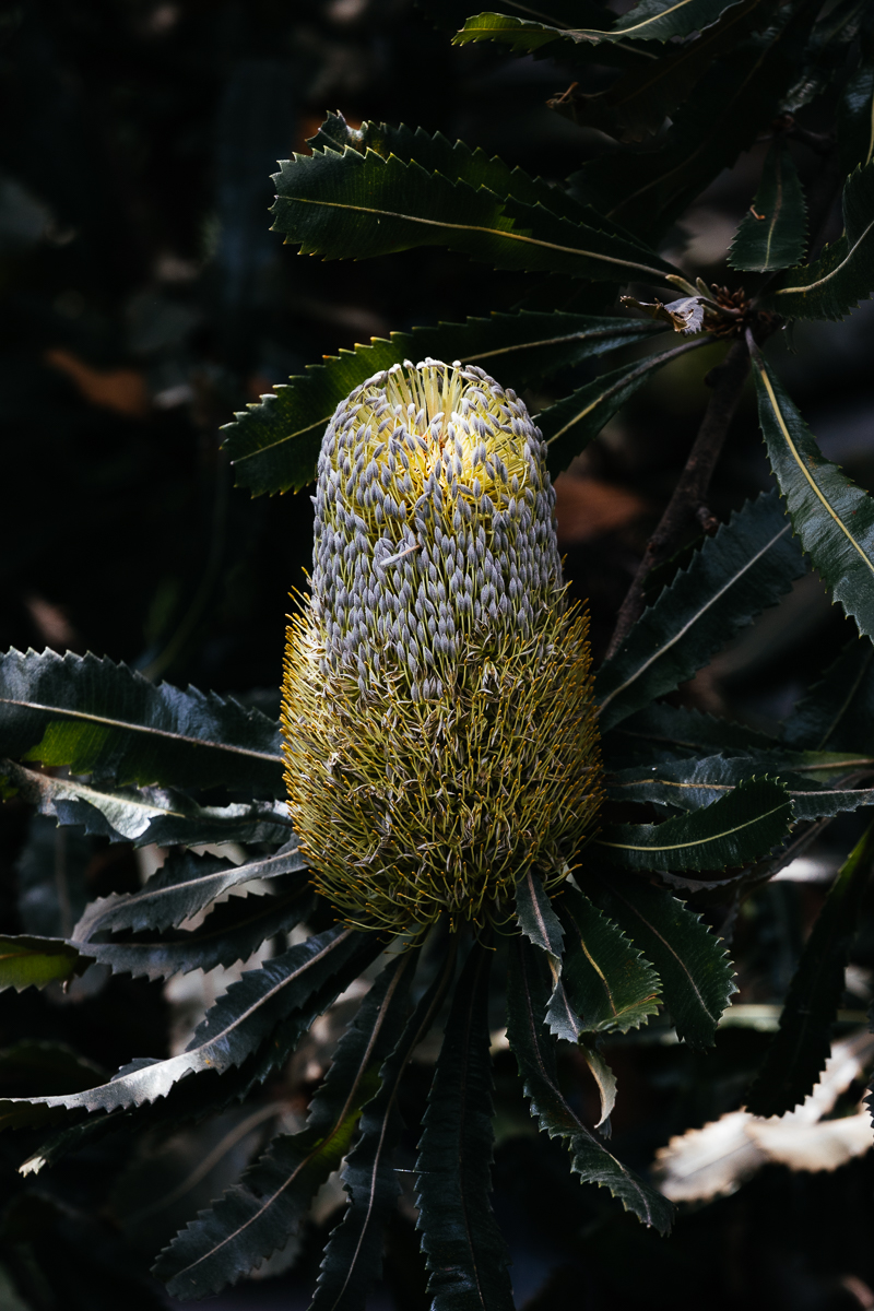 The Banksias were truly stunning.