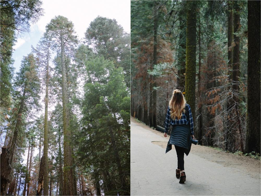 Yosemite,CA_4.jpg
