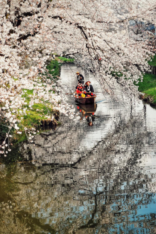 Cherry Blossom River, Kawagoe. Huawei P20 Pro (80mm cam)