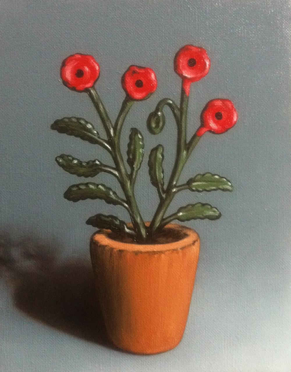 The Poppy Plant
