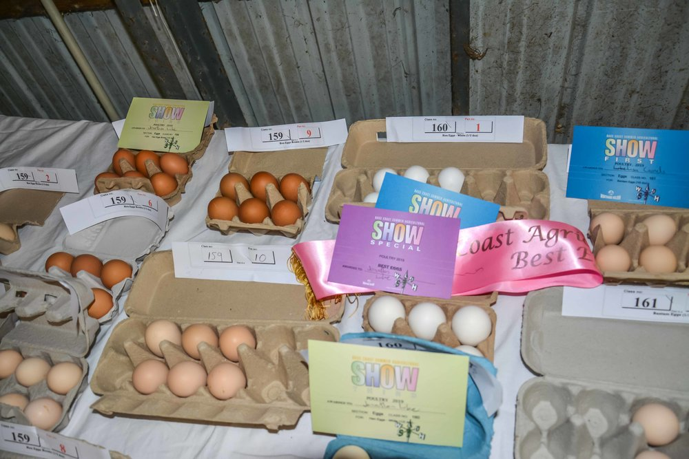 Some of the Eggs  exhibited