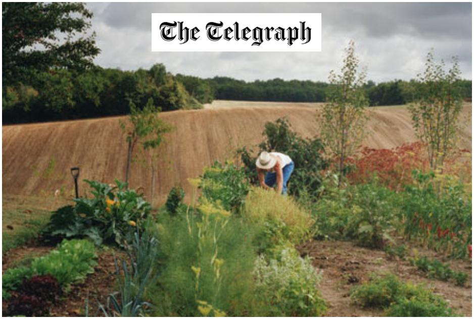 telegraph1.jpg